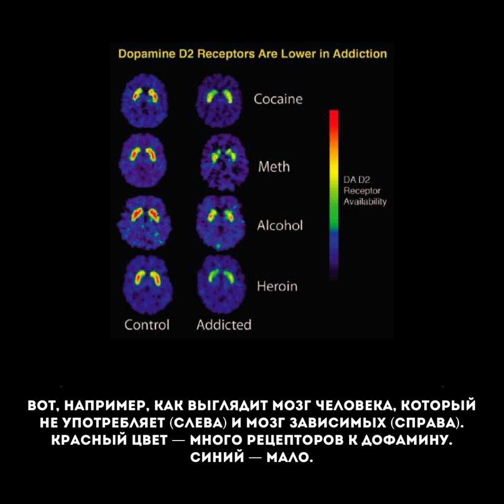 Уровень дофамина у зависимых и независимых